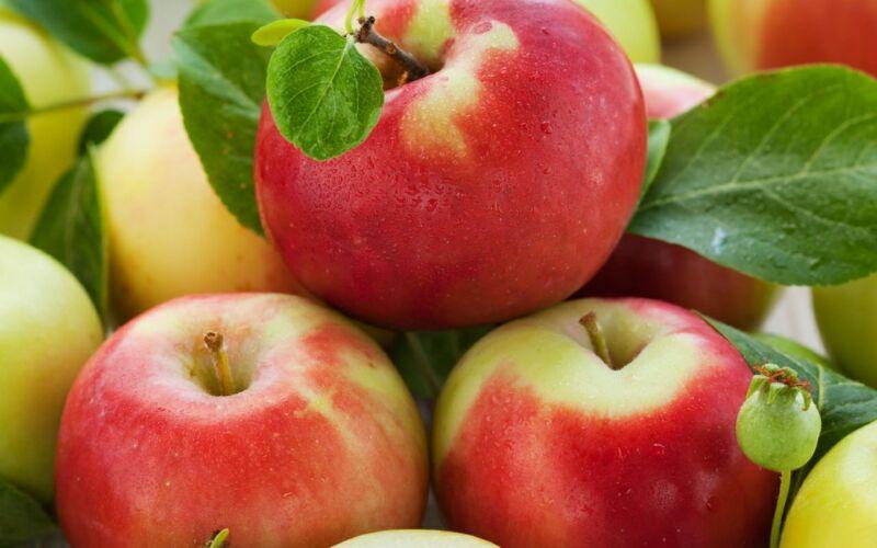 Яблочный сорт